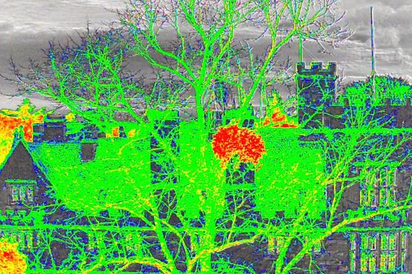 Hyperspectral UAV mistletoe